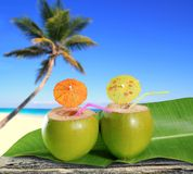 Fresh coconuts cocktails tropical palm tree beach Stock Photography