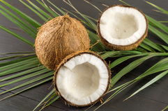 Fresh coconuts and coconut leaves Royalty Free Stock Image
