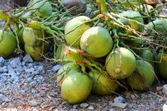 Fresh coconuts from coconut plantation. Fresh pile of coconuts on the ground from coconut plantation Stock Photos