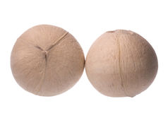 Fresh Coconuts Isolated Stock Photography