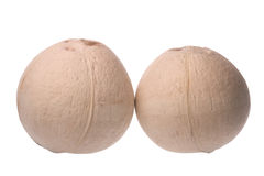 Fresh Coconuts Isolated Stock Images