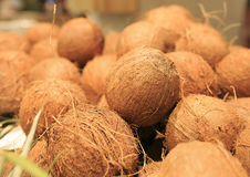 Fresh coconuts in a market of Barcelona.  Royalty Free Stock Photos