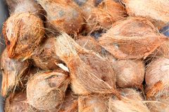 Fresh coconuts. On sale in an Asian market . Shallow depth of field Royalty Free Stock Photos