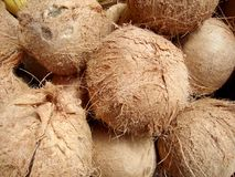 Fresh Coconuts for sale. At Farmers Market in San Francisco, California Royalty Free Stock Photography