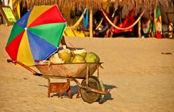 Fresh Coconuts for Sale at Mexican Beach Stock Images