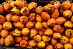 Coconuts for sale in Sri Lanka Royalty Free Stock Photo