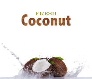 Fresh coconuts in water splash on white background Stock Photography