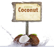 Fresh coconuts in water splash on white background Stock Image