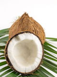 Fresh coconuts on white Royalty Free Stock Photos