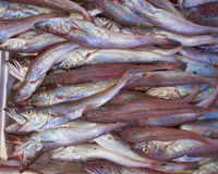 Fresh cod fish (bacala) for sale Stock Photography