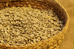 Fresh coffee bean Royalty Free Stock Image