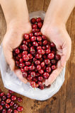 Fresh coffee bean in hand on red berries coffee Stock Photos