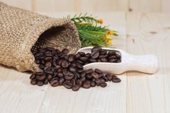 Fresh coffee bean on wood Royalty Free Stock Image