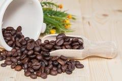 Fresh coffee bean on wood Stock Photos