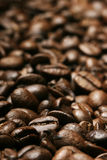 Fresh coffee beans Stock Photos