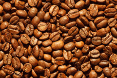 Fresh coffee beans background. Background of delicious freshly roasted coffee beans Stock Photography