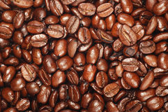 Fresh coffee beans background Royalty Free Stock Image