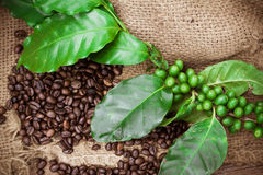 Fresh coffee beans on canvas texture background Stock Photo