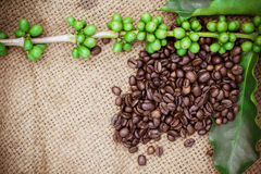 Fresh coffee beans on canvas texture background Royalty Free Stock Images