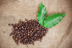 Fresh coffee beans on canvas texture background Stock Photography