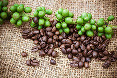 Fresh coffee beans on canvas texture background Royalty Free Stock Photos