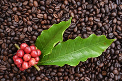 Fresh coffee beans on coffee beans Stock Image