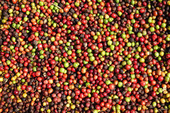 Fresh coffee beans before roast Stock Images
