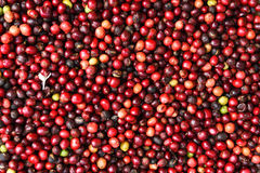 Fresh coffee beans before roast Stock Photography