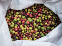 Fresh coffee beans before roast. Royalty Free Stock Photography