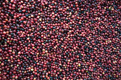 Fresh coffee beans before roast Royalty Free Stock Image