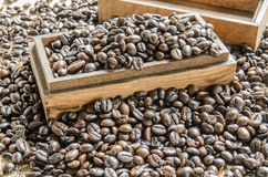 Fresh coffee beans, selective focus Royalty Free Stock Photo