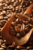 Fresh coffee beans, a valuable commodity Stock Image