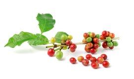 Fresh coffee beans on white background Stock Photos