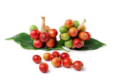 Fresh coffee beans on white background Stock Photography