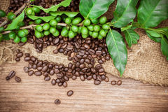 Fresh coffee beans on wood background Royalty Free Stock Photography