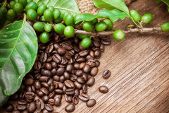 Fresh coffee beans on wood background Royalty Free Stock Photo
