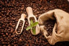 Fresh coffee beens Stock Photos