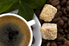 Fresh coffee with coffee branch Royalty Free Stock Photography
