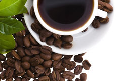 Fresh coffee with coffee branch Stock Image