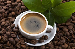 Fresh coffee with coffee branch Royalty Free Stock Photos