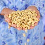 Fresh coffee grains in hands, before roasted. Royalty Free Stock Photos