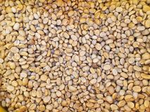 Fresh coffee seed before roast Royalty Free Stock Image