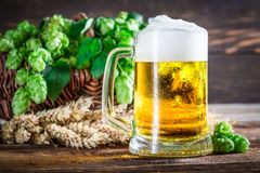 Fresh and cold beer with wheat and hops Stock Photos