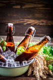 Fresh and cold cider beer Royalty Free Stock Photography