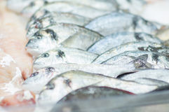 Fresh cold fish lie on ice in supermarket Royalty Free Stock Photos
