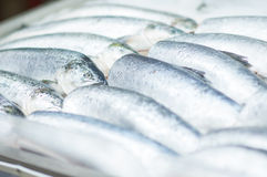 Fresh cold fish lie on ice in supermarket Stock Image