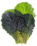 Fresh Collard Greens Stock Photos