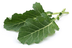 Fresh Collard Greens Royalty Free Stock Photos