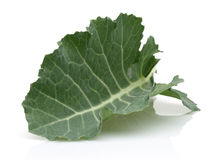 Fresh Collard Greens Royalty Free Stock Photography