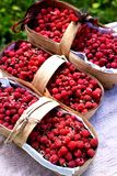 Fresh collected raspberries in the basket. Fresh collfresh collected raspberries in the  basket Royalty Free Stock Photos